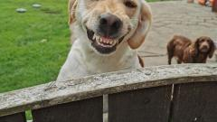 Twig - the dog with the biggest smile winner!