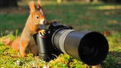 Squirrel with a camera
